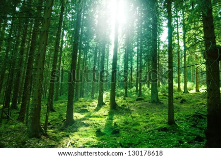Morning sun light in the green forest - stock photo