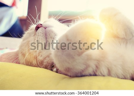 Morning sun light on the cat with blur and select focus background - stock photo