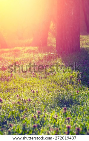 Morning sun rays fall on the green grass with dew in the light mist. Vintage composition