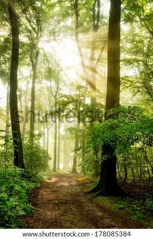 Morning sun shining through the fog and casting its rays into a beautiful forest - stock photo
