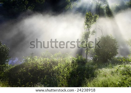 Morning sunbeams in fog - stock photo
