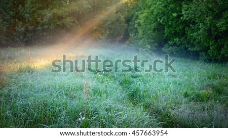 morning sunbeams in fog in the forest - stock photo