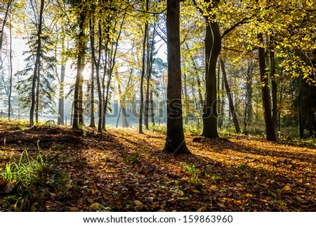 Morning sunlight in the autumn forest - stock photo