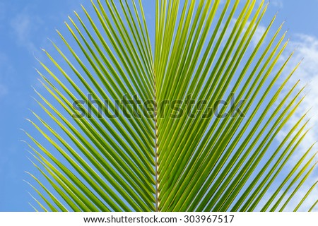 Morning sunlight on a single coconut leaf