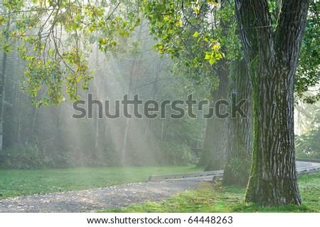 Morning sunrays falling on Birch trees in Deer Lake Park - stock photo