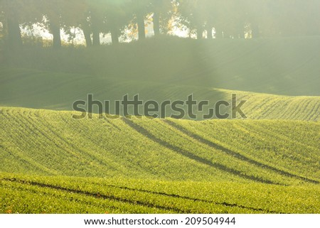 Morning time on north Poland fields.Kashubia (Kaszuby) district./ Morning Field - stock photo