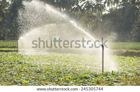 Morning view of a hand line sprinkler system in a farm field. - stock photo