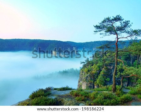 Morning view over rock and fresh green trees to deep valley full of light blue mist. Dreamy spring landscape within daybreak after rainy night. Blue pink sky on horizon, the sunrise start in minute - stock photo