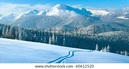 Morning winter calm mountain landscape with coniferous forest on slope (Carpathian Mountains, Ukraine). Four shots stitch image. - stock photo