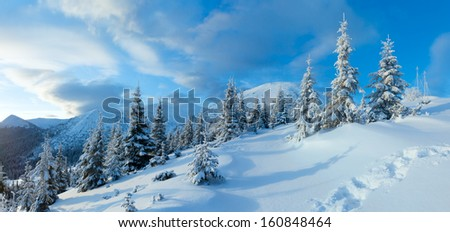 Morning winter mountain landscape with fir trees and footprints on slope (Carpathian, Ukraine).