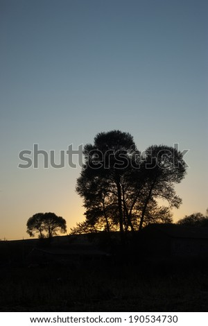 morning with tree and sun - stock photo