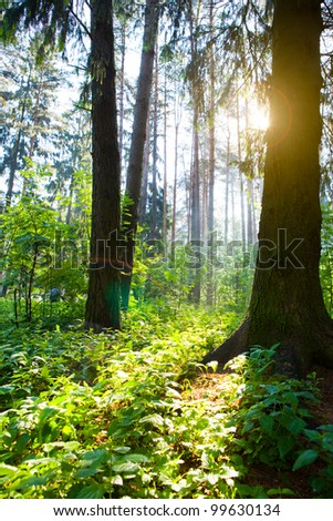 Morning wood - stock photo