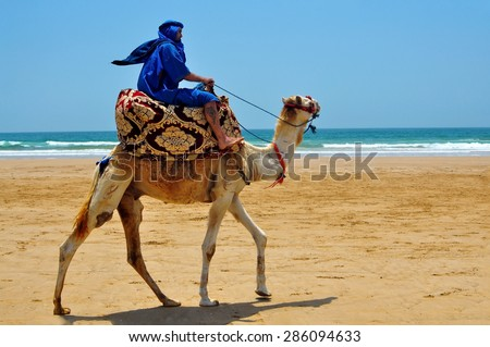 morocco berber riding camel on the atlantic ocean beach