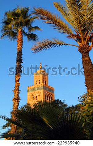 Morocco Marrakesh Koutoubia Mosque minaret framed by huge date palm trees in the late afternoon sunshine - UNESCO World Heritage site - stock photo