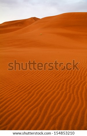Morocco, Sahara desert dunes in the dawn light after very rare rainfall.