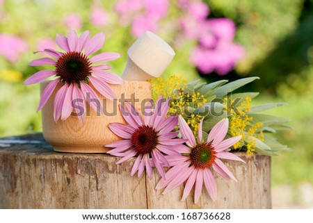 mortar with  coneflower and healing herbs, herbal medicine - stock photo