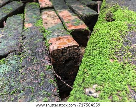 Mos Fungal Fungus Brick Block Worms Stock Photo (100% Legal ...