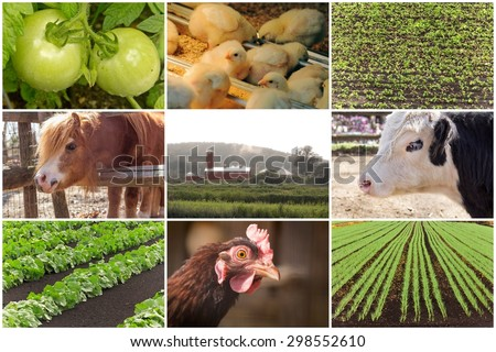 Mosaic of farm animals and agricultural imagery in collage imagery - stock photo