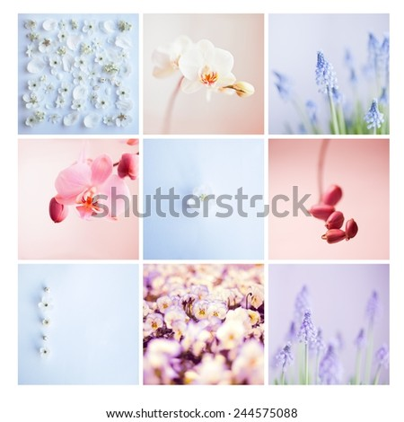 Mosaic of flower's photos: orchid and grape hyacinth. Postcard from holidays. Summer, spring, nature.Nobody.