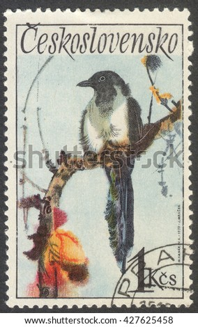 "MOSCOW, RUSSIA - CIRCA MAY, 2016: a post stamp printed in CZECHOSLOVAKIA  shows a Black-billed magpie bird, the series ""Songbirds"", circa 1972 - stock photo"