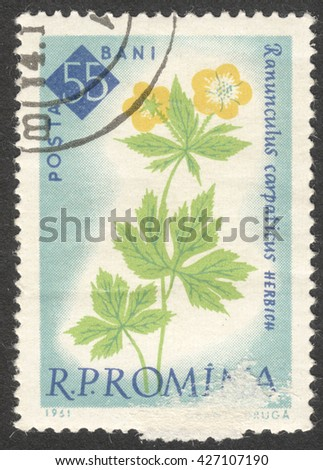 """MOSCOW, RUSSIA - CIRCA MAY, 2016: a post stamp printed in ROMANIA shows Ranunculus carpathicus flower, the series """"The 100th Anniversary of the Botanical Garden, Bucharest - Flowers"""", circa 1961 - stock photo"""