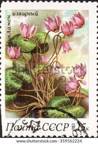 """MOSCOW, RUSSIA - DECEMBER, 2015: a post stamp printed in the USSR shows a Cyclamen flower, the series """"Spring flowers"""", circa 1983 - stock photo"""