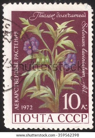 "MOSCOW, RUSSIA - DECEMBER, 2015: a post stamp printed in the USSR shows a plant with the inscription ""Solanum lacinatum"", the series ""Medicinal Plants"", circa 1972"