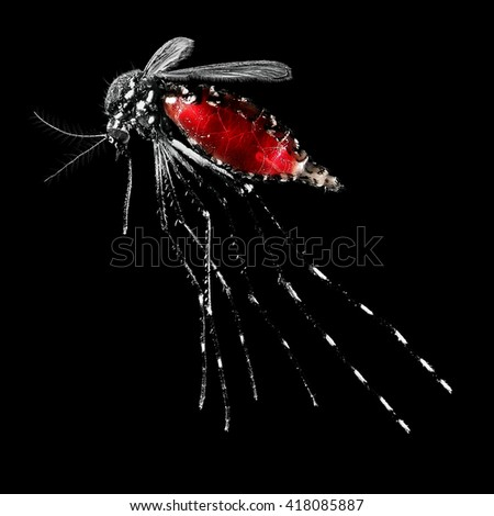 Mosquito (Aedes albopictus), also known as (Asian) tiger mosquito or forest mosquito, female with blood on a black background