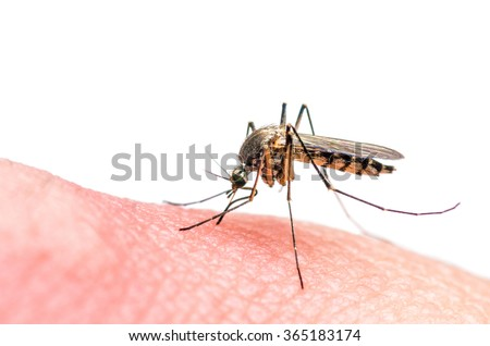 Mosquito bite isolated on white - stock photo