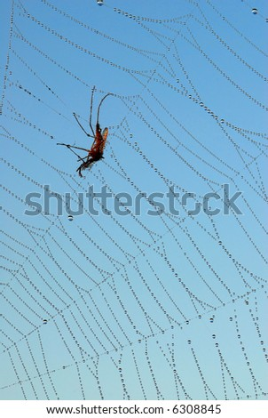 Mosquito caught in web - stock photo
