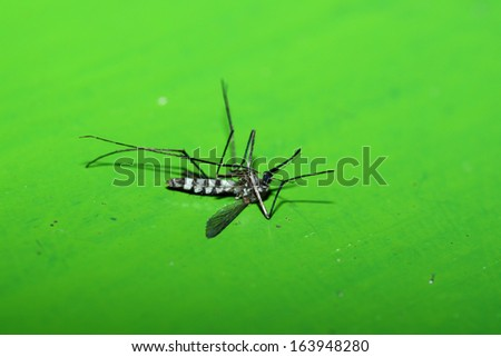 Mosquito dead  - stock photo