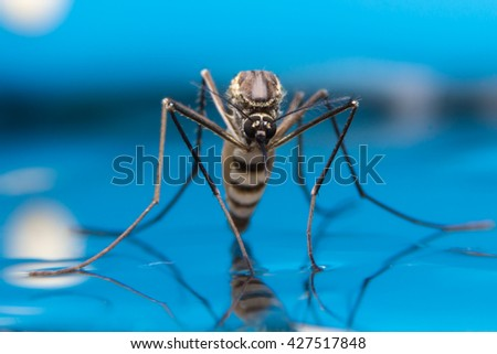 Mosquito on blue background,macro of a Mosquito on water  - stock photo