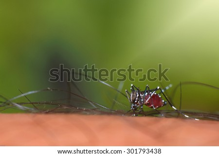 mosquito on human skin - stock photo