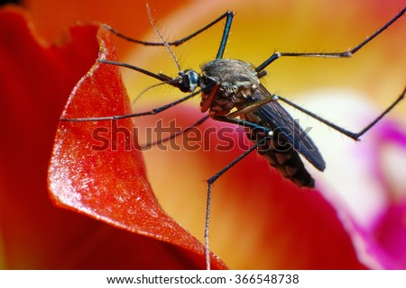 Mosquito on orchid petal - stock photo