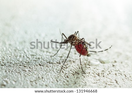 mosquito,red blood - stock photo