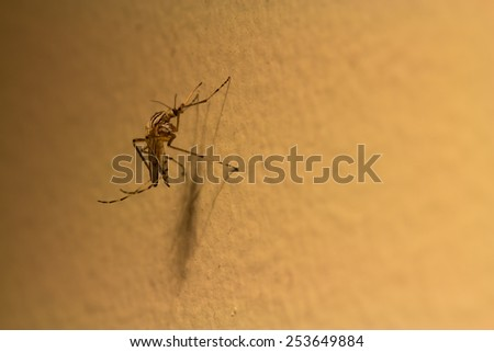 Mosquito sitting on a wall with a shadow under lamplight. - stock photo