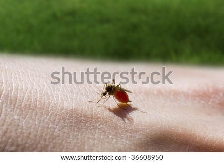 mosquito sucking a hand