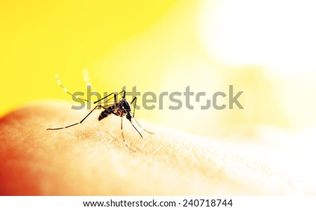 Mosquito sucking blood on human skin with nature background - stock photo