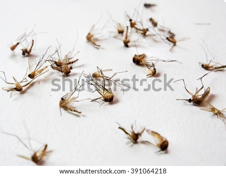 Mosquitoes dead on white - stock photo