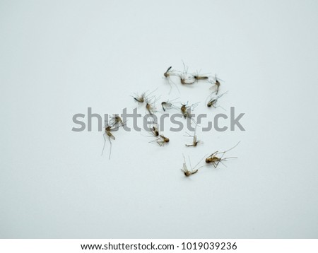 Mosquitoes On White Background Dangerous Insects Stock Photo