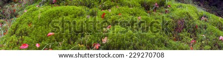 moss and leaves in autumn forest - the gentle transitions of tones and colors, warm greens and golden hues, as panorama shot for a beautiful decorative background - stock photo
