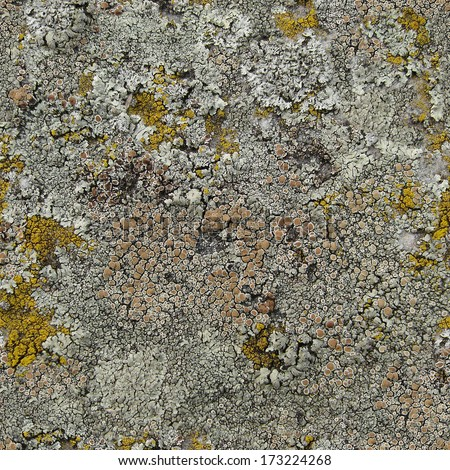 Moss and lichen on the stone surface. Seamless texture - stock photo