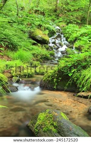 Moss and stream, Oirase stream, Aomori, Japan - stock photo