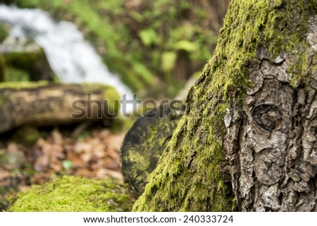 Moss and waterfall in the forest - stock photo