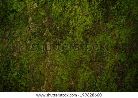 moss background - stock photo