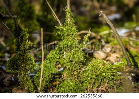 Moss close-up. - stock photo