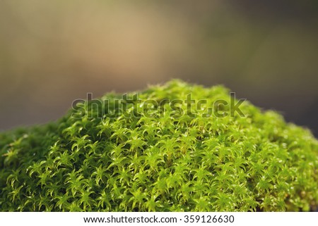 Moss close up and focus stacked - stock photo