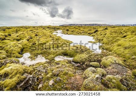Moss covered lava field Kirkjubaeklaustur, Iceland - stock photo