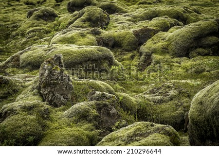 Moss covered lava rocks in south Iceland - stock photo