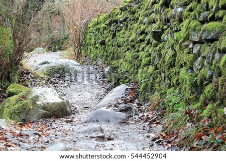 Moss covered natural stone wall in woodland, Lake District National Park, England, UK